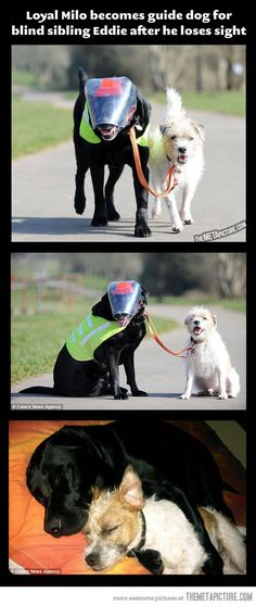 Blind dog with his own guide dog #randomactsofkindness #payitforward get more only on http://freefacebookcovers.net