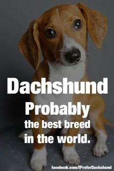 The best breed :)