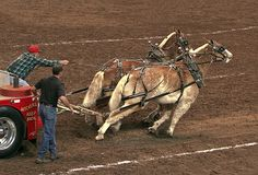 Horse Pull. A good above angle