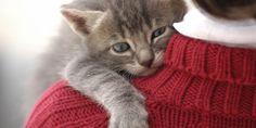 Deze 8 'rare' kattentrekjes zijn perfect normaal: een kattenexpert legt het aan ons uit
