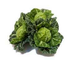 Angie Scarr / Friday Night - Brassica Plants