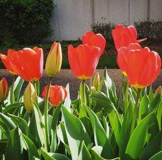 Spring Day. #spring #background #flower #beautiful #floral #nature #blossom #season #summer #fresh #natural #bloom #colorful #beauty #flora #springtime #pink #blooming #flowers #leaf #banner #freshness #blue #springtime #springday