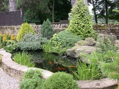 Beautifully landscaped pond filled with koi