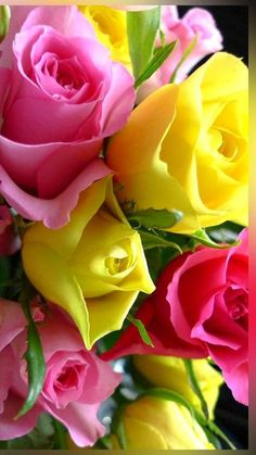 Enthralling And Mesmerizing Pink And Yellow Roses. Beautiful Flowers Wallpapers, Beautiful Rose Flowers, Love Rose, All Flowers, Flowers Nature, Exotic Flowers, Amazing Flowers, Colorful Flowers, Yellow Roses