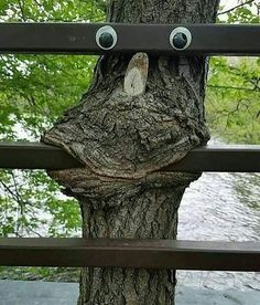 Fun and games with Mother Nature !- Fun and games with Mother Nature ! Fun and games with Mother Nature ! Weird Trees, Graffiti, Tree Faces, Unique Trees, Growing Tree, Outdoor Art, Tree Art, A Tree, Amazing Nature