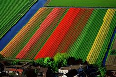 Holland's tulip fields from above.  :)