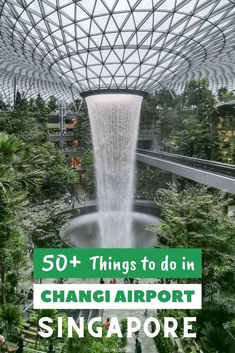 53 Things to Do in Changi Airport, Singapore Coming to Singapore by plane? Make sure you allocate enough time to explore Changi Airport. There are over 50 incredible things to do in Changi Airport. Singapore Travel Tips, Singapore Itinerary, Visit Singapore, Singapore Holidays, Singapore Map, Singapore Changi Airport, Bali, Asia Travel, Cruise Travel