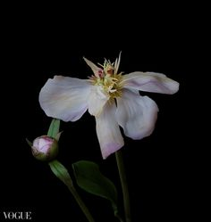Quel che resta Cold Porcelain Flowers, Plants, Flora, Plant, Planting