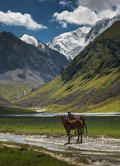 Horses, Tien-Shan, Kyrgizia