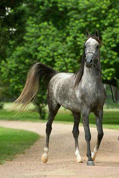 •♥•✿ڿڰۣ(̆̃̃•Aussiegirl #Horses Mulawa Arabian Stud | Sydney Australia
