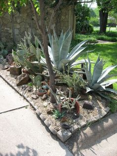 Xeriscaping Ideas For A More Water-Efficient Garden -  Xeriscape gardening is a good way to cut down on water usage while still having a beautiful, low-maintenance landscape. Read this article for tips on creating a water-efficient garden.