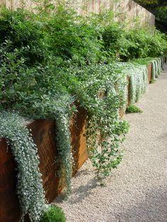 Modern Landscaping, Outdoor Landscaping, Outdoor Gardens, House Landscape, Landscape Design, Small Garden Wall Ideas, Backyard Planters, Australian Garden Design, Contemporary Garden