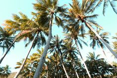 Palm trees Here Comes The Summer, Coconut Grove, Summer Dream, Photo Diary, Great Barrier Reef, Beach Holiday, Tropical Paradise, Island Life, Dream Big