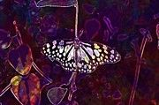 """New artwork for sale! - """" Blue Tiger Butterfly Insect  by PixBreak Art """" - http://ift.tt/2tzo28s"""