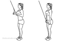 Triceps Cable Pushdown | Illustrated Exercise guide - WorkoutLabs