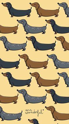 Ideas wallpaper fofos cachorro salsicha for 2019 Tumbler Backgrounds, Cool Backgrounds, Dog Wallpaper Iphone, Animal Wallpaper, Dog Lockscreen, Mr Wonderful, Tumblr Pattern, Wallpaper Fofos, Dog Background