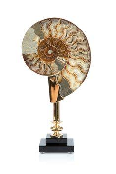 Coastal Ammonite - More Accessories - The Sofa & Chair Company