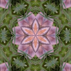 Kaleidoscope of a beautiful fungus