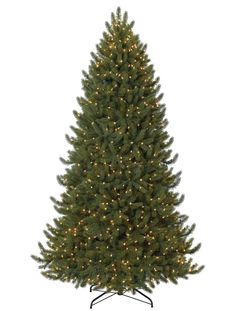 Vermont White Spruce™ Narrow | Balsam Trees