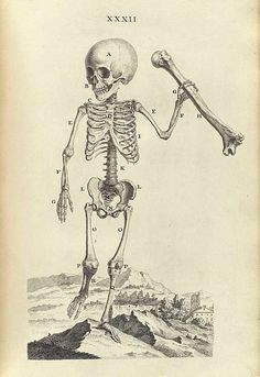 Skeleton of a Child One and a Half Years Old Holding a Thigh Bone, from Osteographia, or The Anatomy of Bones by William Cheselden illustrations by Gerard Vandergucht and Jacob Schijnvoet SIZES Anatomy Illustration, Vanitas, Skull And Bones, Skull Art, London, Creative Inspiration, Fine Art Paper, Creepy, Drawings