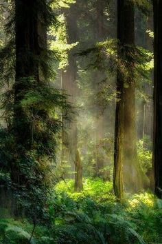 Fantasy Forest, Magic Forest, Tree Forest, Mystical Forest, Forest Scenery, Forest Light, Beautiful Forest, Beautiful Places, Beautiful Pictures