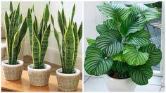 12 Plantas que pueden sobrevivir incluso en el rincón más oscuro de tu hogar – ECATELI