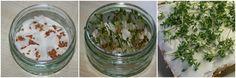 Kresse selber anbauen - Sprossen und Keimlinge selber ziehen - Anleitung - Rezept - Garten auf der Fensterbank