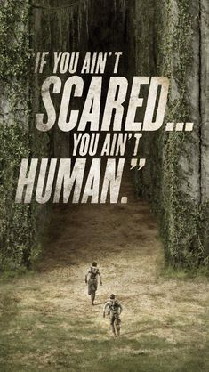 the maze runner wallpapers | Tumblr