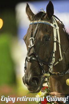 I'm Themightyquinn retires. Standardbred Racing, Harness Racing, Dark Horse, Horse Racing, New Zealand, Australia, Horses, History, American