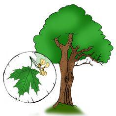 Výsledok vyhľadávania obrázkov pre dopyt kreslene stromy Grinch