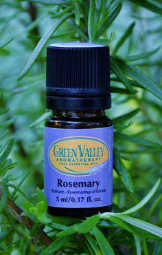 Rosemary Essential Oil Theraputic uses. Acne, arthritis, asthma, back pain, cellulite, colds and flu, constipation, dandruff, depression, diarrhea, enthusiasm, fatigue, fluid retention, greasy hair and skin, headaches, memory enhancement, menstrual pain, migraines, muscular pain, nervous exhaustion, respiratory infections, rheumatism, self-confidence, sinus problems, stiff neck.