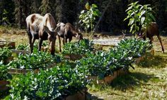 $10 cedar raised garden bed