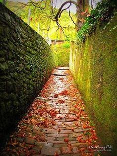 Heidelberg Fall| by © ameyt |**.