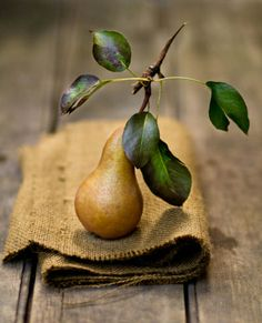Pear -  still life  - by rikkims  -  Colors:  Brown, Green