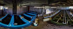 Capturing image of Aquaponics Fish Farm at Rotterdam Schiedam