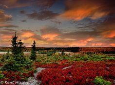 04B-43  MORNING GLOW, BEAR ROCKS PRESERVE, WV © KENT MASON