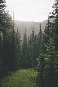 Image uploaded by Find images and videos about nature, travel and forest on We Heart It - the app to get lost in what you love. Nature Aesthetic, Deep Forest, Autumn Forest, Beautiful Landscapes, The Great Outdoors, Wonders Of The World, Mother Nature, Woodland, Nature Photography
