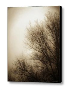Nature Tree Branches Foggy Winter Morning by PaintedTulipStudio