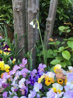 今頃うちの花壇に咲きました。