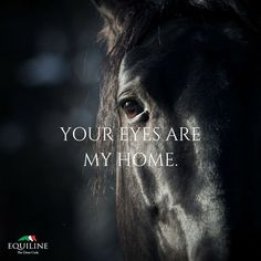 Your eyes are my home. Your eyes are my home. Horse Love Quotes, Inspirational Horse Quotes, Horse Riding Quotes, Equine Quotes, Equestrian Quotes, Horse Photos, Horse Pictures, Cute Horses, Beautiful Horses