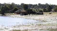 Creepy Cool - Massive Spiderwebs engulf Australian town as arachnids escape flood
