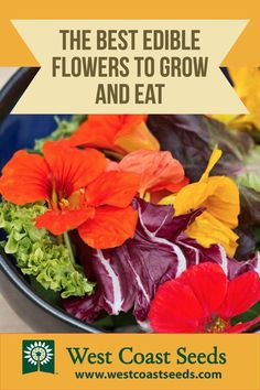 Edible flowers are easy to grow and add great flavour to any salad recipe. Learn how to grow your own flowers in your organic garden.