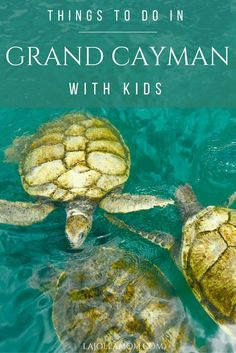 These are the things you MUST do on a Grand Cayman family vacation.