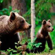 Respuestas osos 94