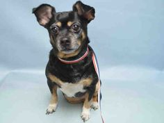RETURN!! SUPER URGENT Brooklyn Center MISTY LOPEZ aka SANSA- A0998545…