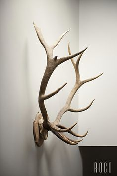 Antlers...could use this for tattoo (the one side)