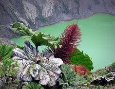Volcán Poas Costa Rica - Buscar con Google