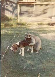 vintage hunting photos - Recherche Google