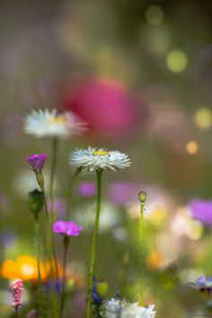 Summer Meadow by Eva Lechner