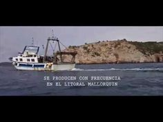 Año 2016 - OCEANA   La organización solicita a la Administración contundencia en las sanciones a estos actos, muy extendidos en este mar   ...